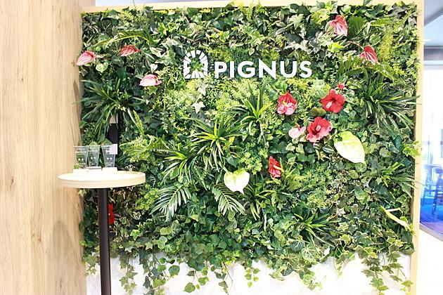 南の海の世界観が印象的。「ピグナス」がオフィスで表現したいこととは?