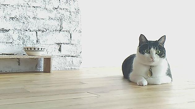 ペットによる「床の傷」を避けるには!?おすすめフローリングをプロが解説