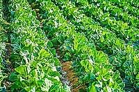 農地は地目を転用すれば売買できる?農地売却のポイント