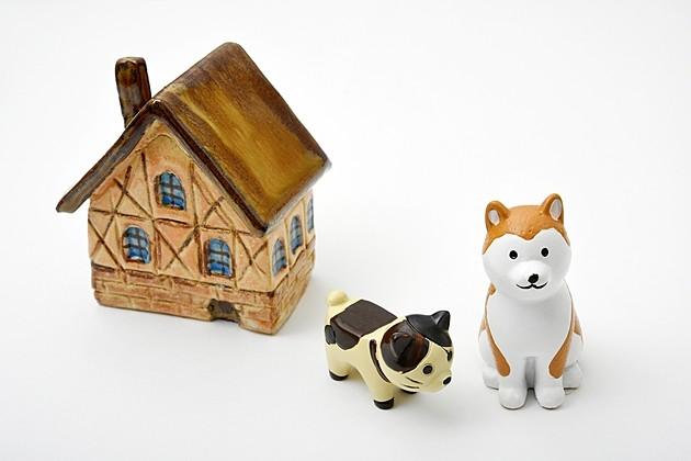 一人暮らしで犬を飼う前に知っておきたい3つのこととは?おすすめ犬種はこれだ