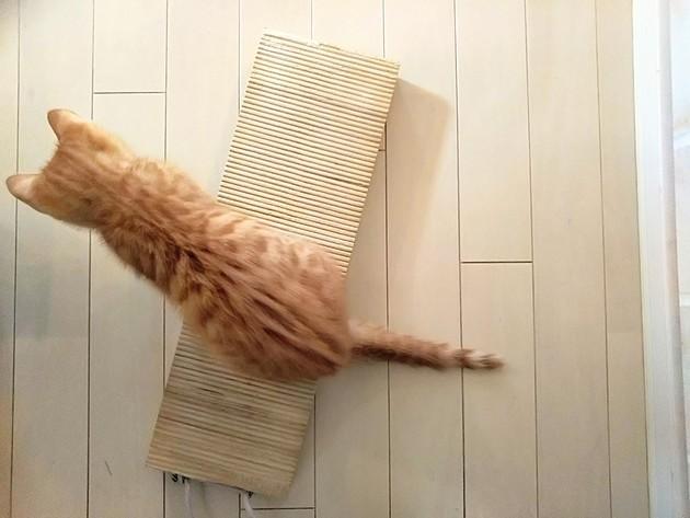 賃貸住宅で猫を飼う際に必要な「5つの対策」とは