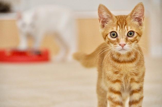 「ペット可賃貸」にも種類がある!?契約時に注意すべきこと3つをプロが解説