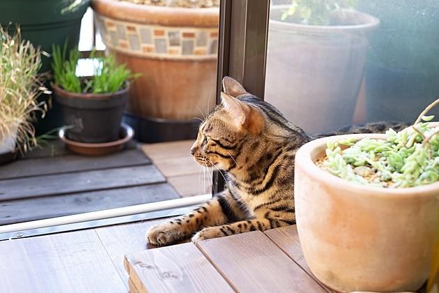 マンションのペットトラブル「犬の吠え声・ベランダ猫問題」どうする?対処法をプロが解説
