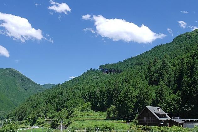 山林の固定資産税はいくらかかる?計算方法・売却方法を解説