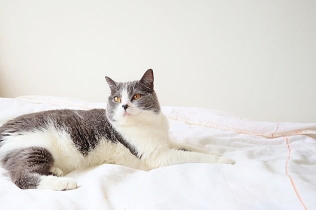 一人暮らしで猫を飼いたい!「飼い方・費用」を徹底解説
