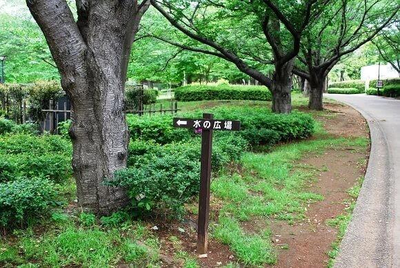 青葉の森公園10