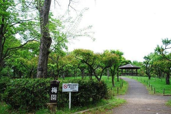 青葉の森公園12