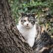 野良猫ってどんな生活をしているの?