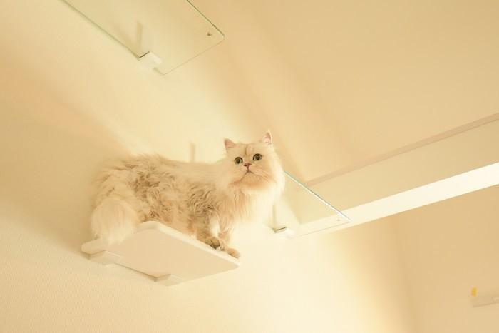 猫4匹まで飼育可!猫好き一級建築士が手掛けた賃貸アパート「キャリコ大森」に行ってきた