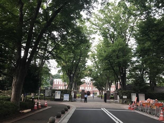 成蹊小学校前のけやき並木