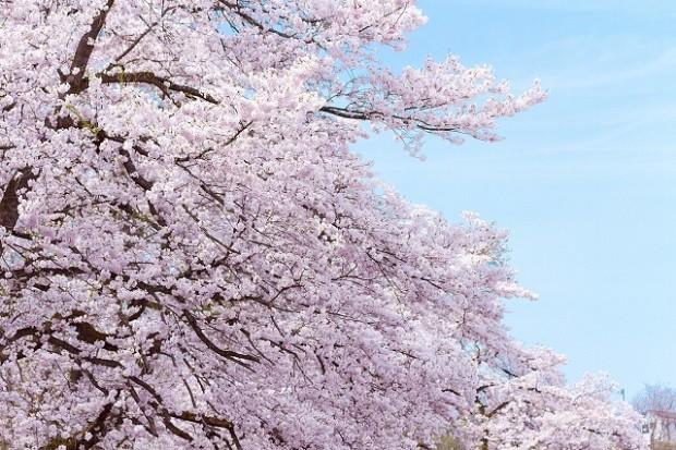 雄大な自然に包まれて健やかな暮らしを楽しめる糟屋郡久山町