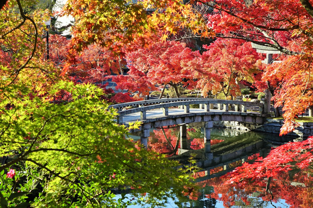 自然豊かな京のまち「京都市左京区」の醍醐味とは?
