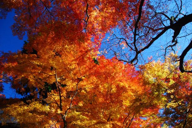 四季の花を堪能できる「京都市山科区」の住みやすさ