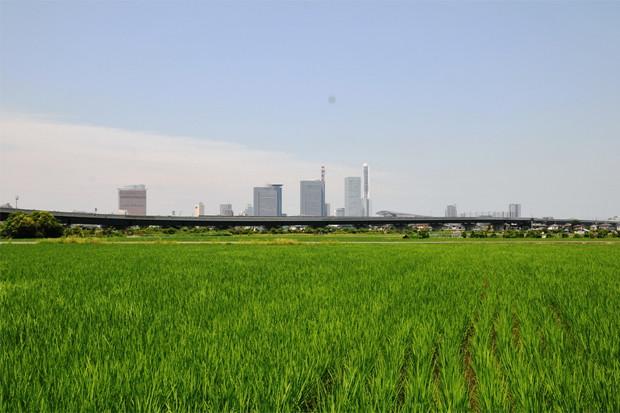 発展を続ける緑と文化の街・さいたま市北区の住みやすさ