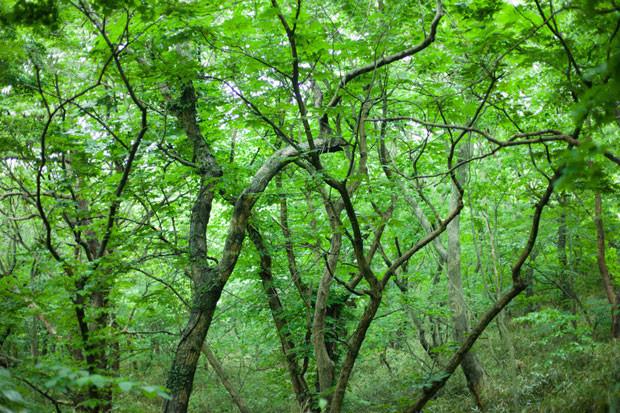 美しい自然があふれるニュータウン、堺市南区